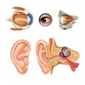 Eye and ear disorders